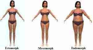 metabolism types endomorph ectomorph mesomorph